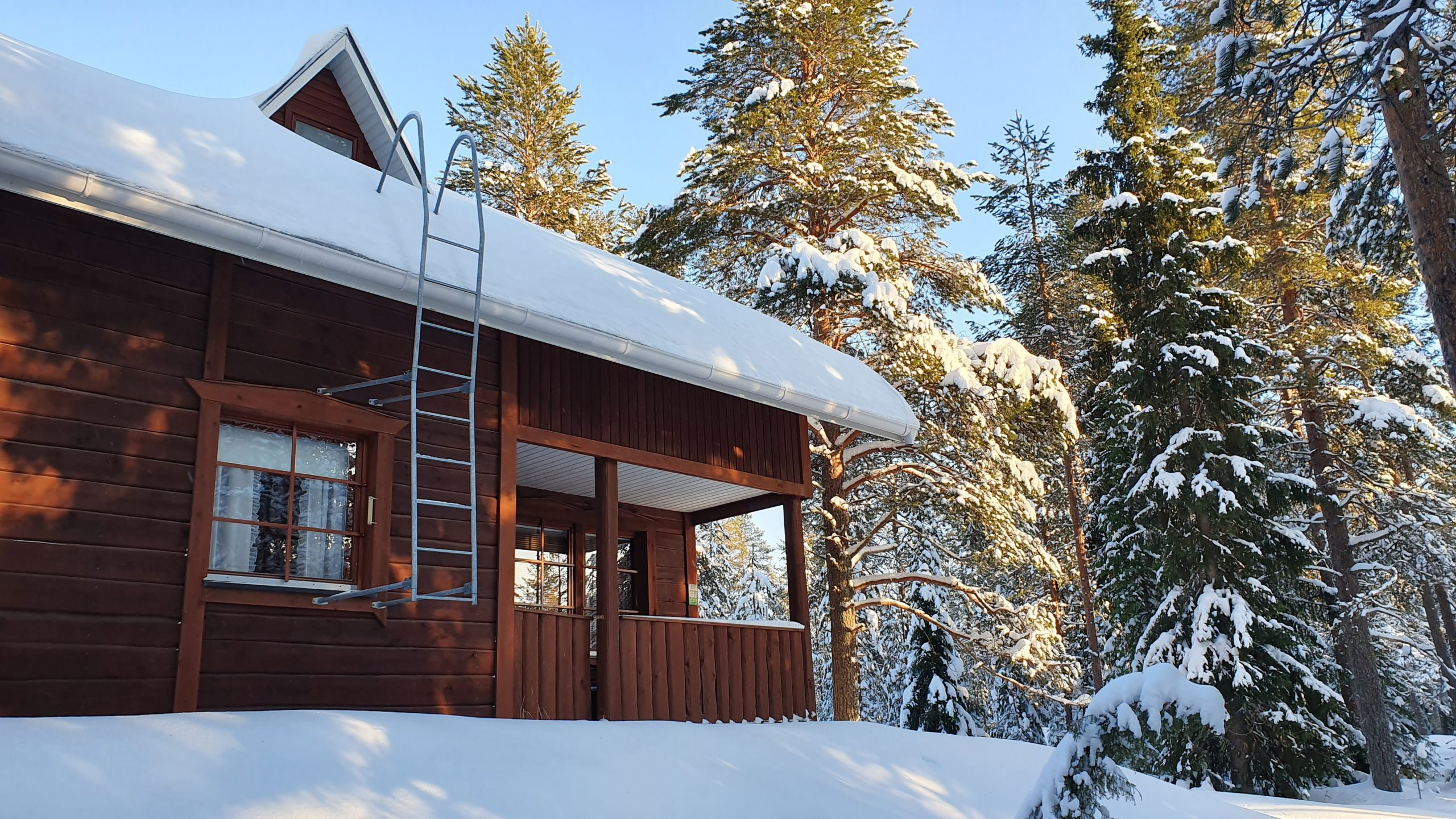 Kuutti Chalet and beautiful snowy trees